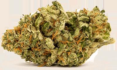 24K Gold Cannabis Strain Profile