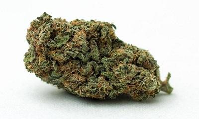 Memory Loss Cannabis Strain Profile