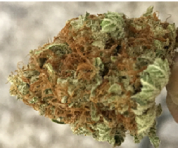 The Pros and Cons of Autoflowering Cannabis Strains