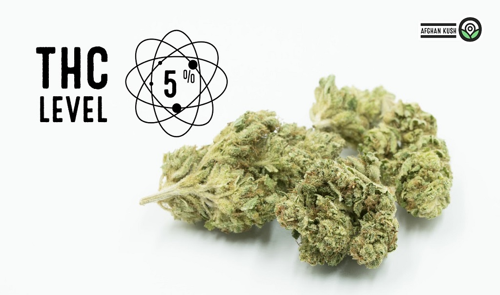 Just the facts Afghan Kush Strain