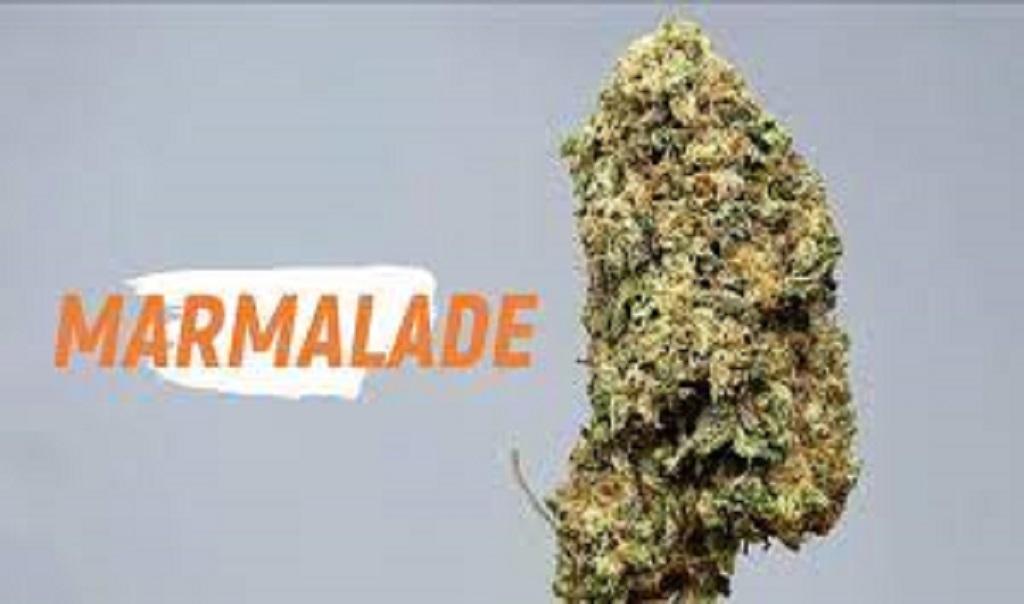 Marmalade Cannabis Strain