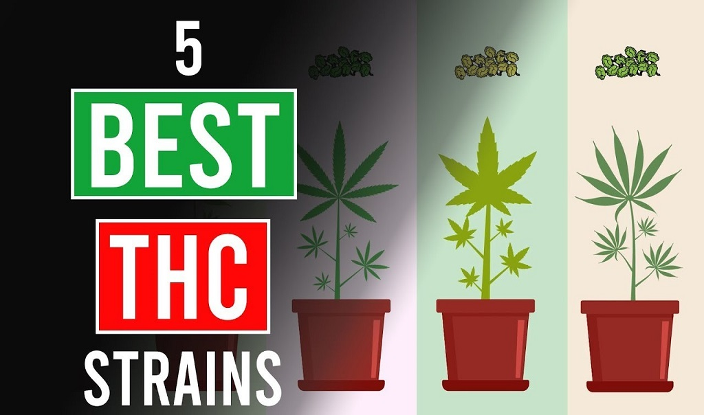 The 5 Strongest Cannabis Strains of 2020
