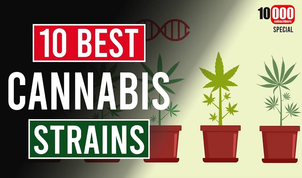 The Top 10 Cannabis Strains