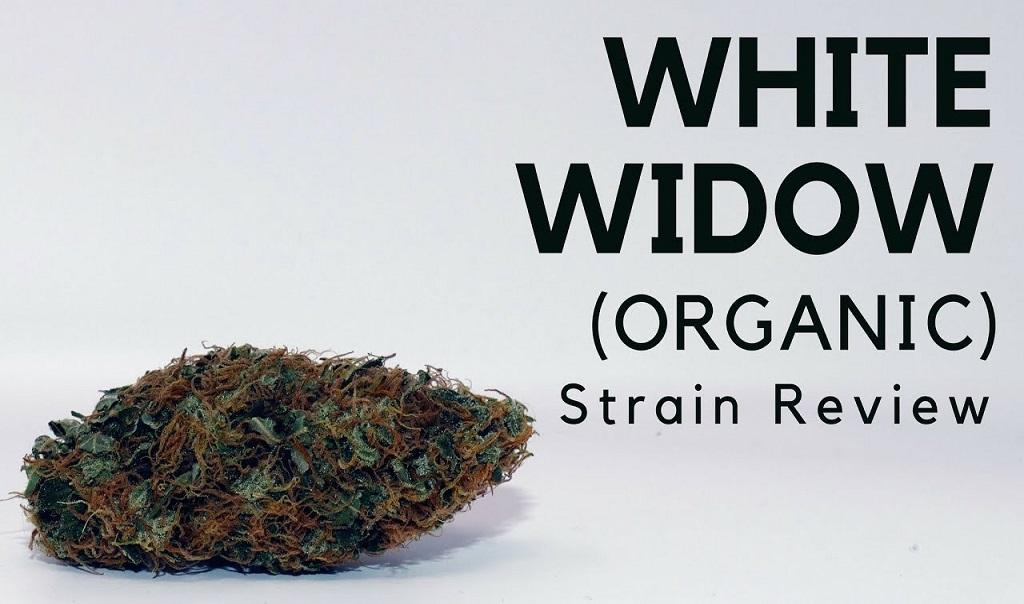 White Widow Strain Review