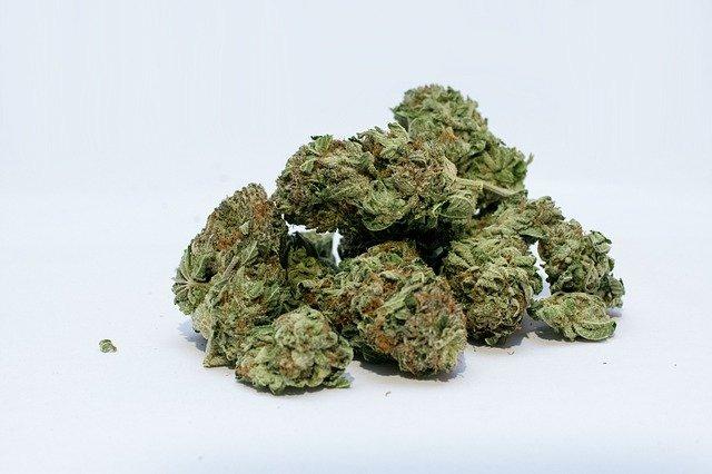22 Cannabis Strain Profile