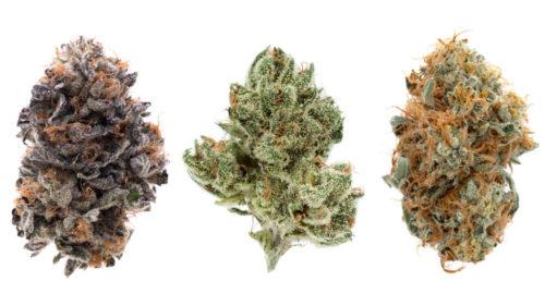 Afgooey Cannabis Strain Profile